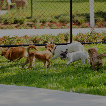 Large Dog Park at Rio Vista Apartments